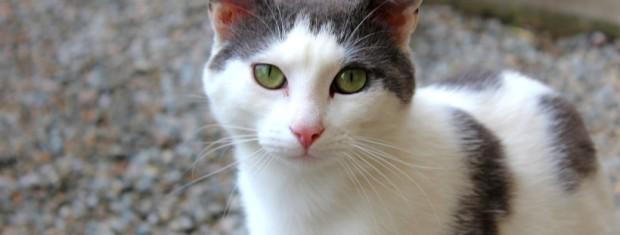 petits chats noir et blancs recueillis
