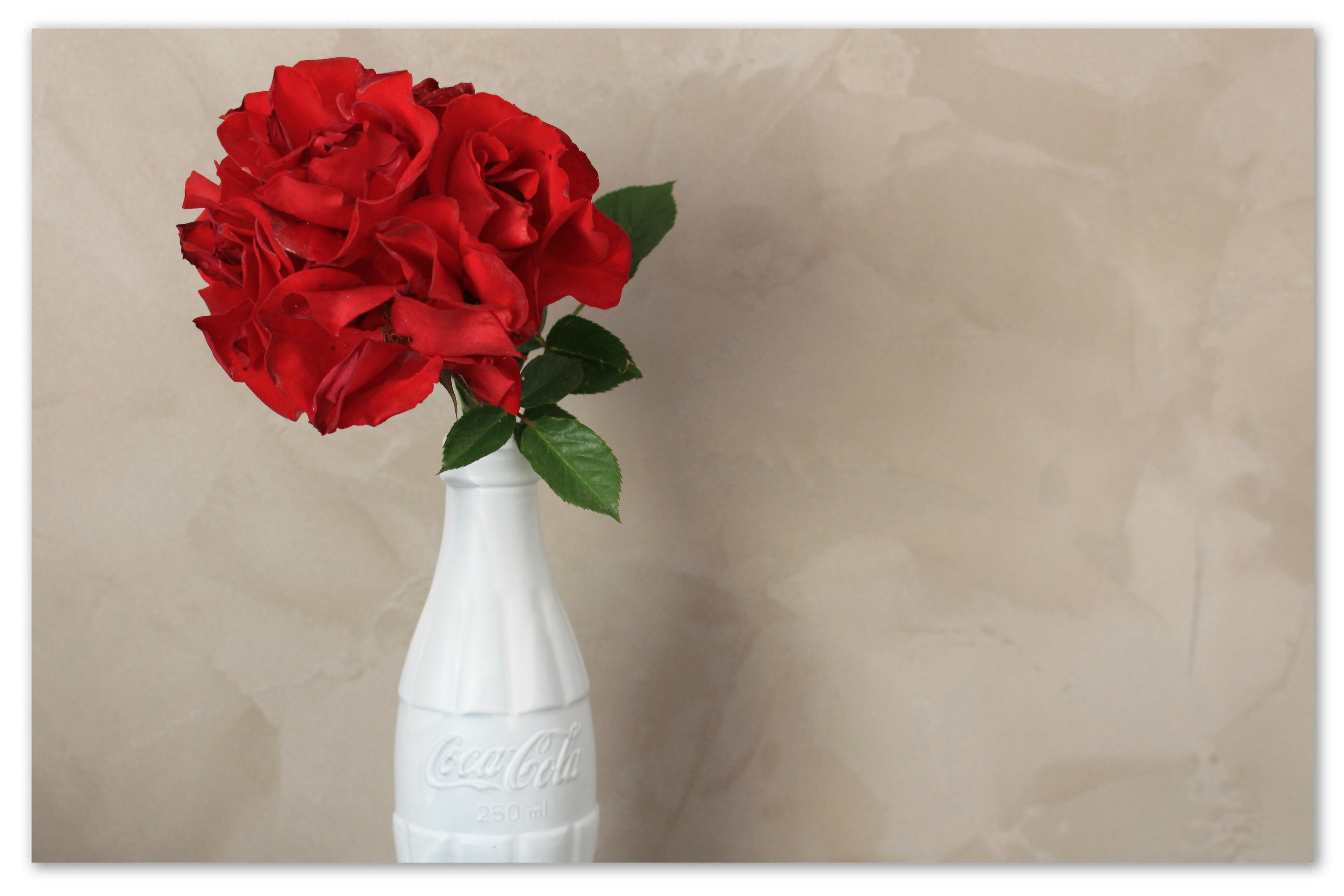 fleur rose.jpg